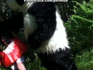 나무에 팬더와 작은 빨간 승마 후드 빌어 먹을