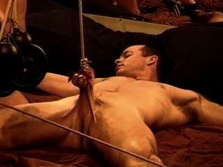 근육 cbt, bash 그의 공, 그의 수탉을 이길