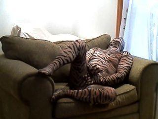 큰 의자에 누워있는 동안 호색한 단단한 호랑이 바보