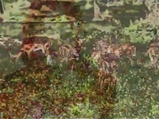jared brooks 9 명의 벌거 벗은 미녀들 (damon thomas []의 영상)