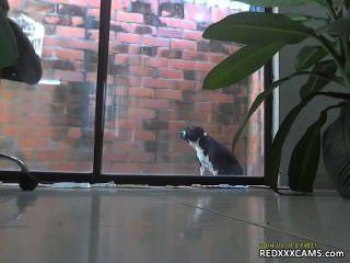 씨발 내 털이 많은 고양이 redxxxcams.com