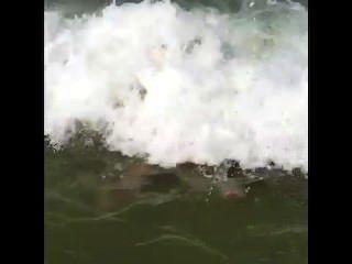해변에서 두꺼운 흰색 병아리