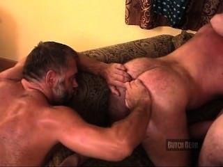 근육 곰 호텔